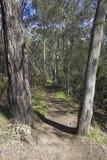 Forest Path Imagem de Stock