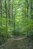 Trajeto de floresta Imagem de Stock Royalty Free