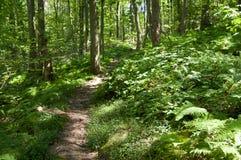 Trajeto de floresta Fotografia de Stock Royalty Free
