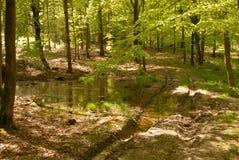 Trajeto de floresta Foto de Stock Royalty Free