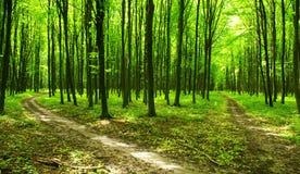 Trajeto de floresta fotos de stock royalty free
