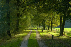 Trajeto de floresta fotos de stock