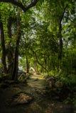 Trajeto de floresta Imagens de Stock Royalty Free