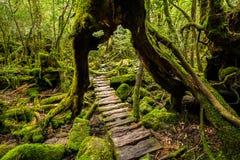 Trajeto de floresta abaixo fotos de stock