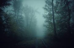 Trajeto de floresta assombrado através da névoa Fotografia de Stock Royalty Free