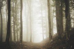 Trajeto de floresta através da névoa Fotografia de Stock Royalty Free