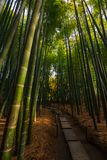 Trajeto de floresta de bambu no Tóquio foto de stock