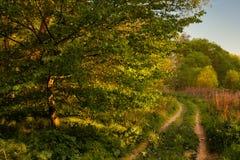 Trajeto de floresta Boskovice fotografia de stock royalty free