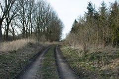 Trajeto de floresta com as árvores desencapadas no inverno dinamarquês, segunda-feira Fotos de Stock Royalty Free