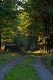Trajeto de floresta com luz solar imagem de stock royalty free