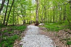 Trajeto de floresta com ponte de madeira Fotos de Stock