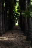 Trajeto de floresta das palmeiras Imagem de Stock Royalty Free