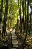 Trajeto de floresta de bambu Imagem de Stock Royalty Free