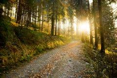 Trajeto de floresta do outono