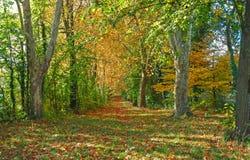 Trajeto de floresta do outono Imagem de Stock Royalty Free