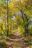 Trajeto de floresta do outono Foto de Stock Royalty Free