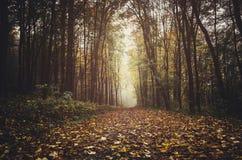 Trajeto de floresta do outono com folhas caídas Imagem de Stock Royalty Free