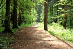 Trajeto de floresta do verão fotografia de stock