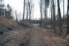 Trajeto de floresta em ramos caídos outono Fotos de Stock