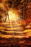 Trajeto de floresta ensolarado no outono imagem de stock royalty free