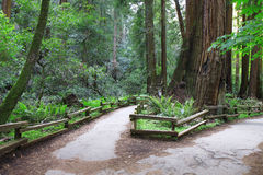 Trajeto de floresta na mola Fotos de Stock