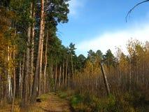 Trajeto de floresta no outono imagem de stock royalty free
