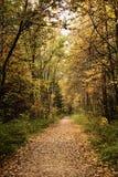 Trajeto de floresta no outono Fotografia de Stock Royalty Free