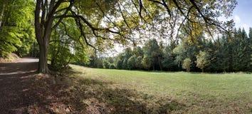 Trajeto de floresta no verão Imagens de Stock