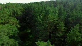 Trajeto de floresta, o voo de um zangão sobre a floresta filme