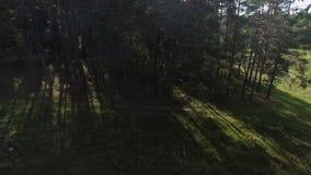 Trajeto de floresta, o voo de um zangão sobre a floresta video estoque