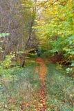 Trajeto de floresta pequeno em cores do outono imagem de stock