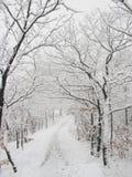Trajeto de floresta Snow-covered Fotografia de Stock