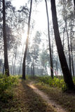 Trajeto de floresta, tempo morno do verão Imagens de Stock Royalty Free