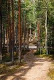 Trajeto de floresta vazio que vai a um trajeto de floresta maior do cascalho imagens de stock