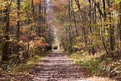 Trajeto de Forrest foto de stock
