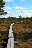 Trajeto de madeira através do pântano de turfa Foto de Stock