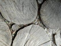 Trajeto de madeira do coto imagens de stock royalty free