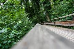 Trajeto de madeira místico na floresta Fotografia de Stock Royalty Free