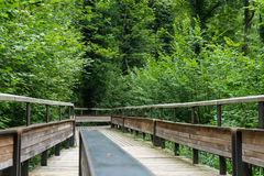 Trajeto de madeira místico na floresta Foto de Stock Royalty Free