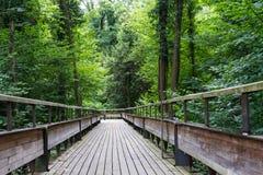 Trajeto de madeira místico na floresta Foto de Stock