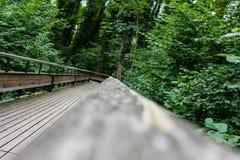 Trajeto de madeira místico na floresta Imagens de Stock Royalty Free