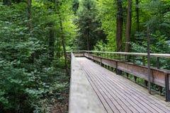 Trajeto de madeira místico na floresta Imagem de Stock