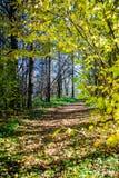 Trajeto de madeira na floresta foto de stock royalty free