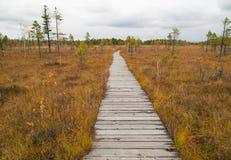 Trajeto de madeira que corre através do pântano Fotografia de Stock