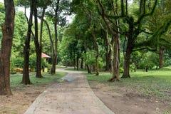 Trajeto de passeio em um parque público Foto de Stock Royalty Free