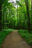 Trajeto de passeio na floresta Foto de Stock Royalty Free