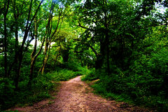 Trajeto de passeio na floresta de Epping Foto de Stock