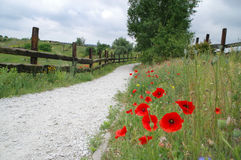 Trajeto de passeio rural Imagem de Stock Royalty Free