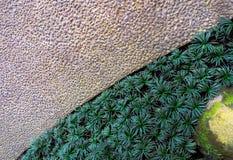 Trajeto de pedra concreto do cascalho do cimento com grama do anão de Kyoto e granito Moss Stone Imagem de Stock Royalty Free