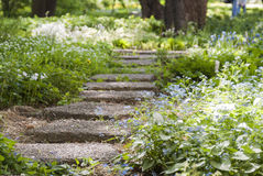 Trajeto de pedra em um parque coberto de vegetação com as flores Foto de Stock Royalty Free